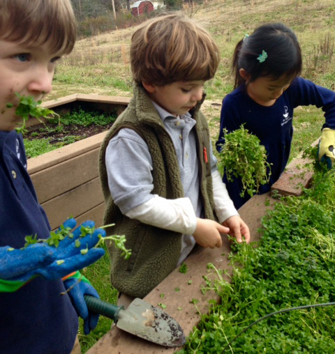 gardening new 2