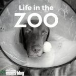 Life in the Zoo: Confessions From an Animal Lover