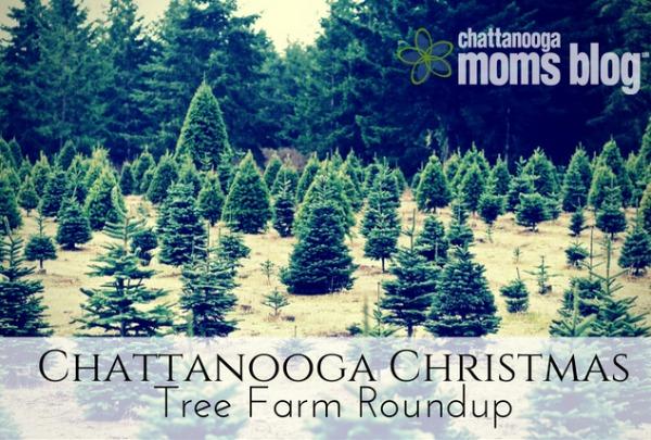 Chattanooga Christmas Tree Farm Roundup