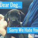Dear Dog, Sorry We Hate You
