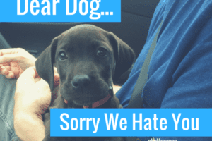 Families with Pets sometimes feel the Guilt| Chattanooga Mom's Blog