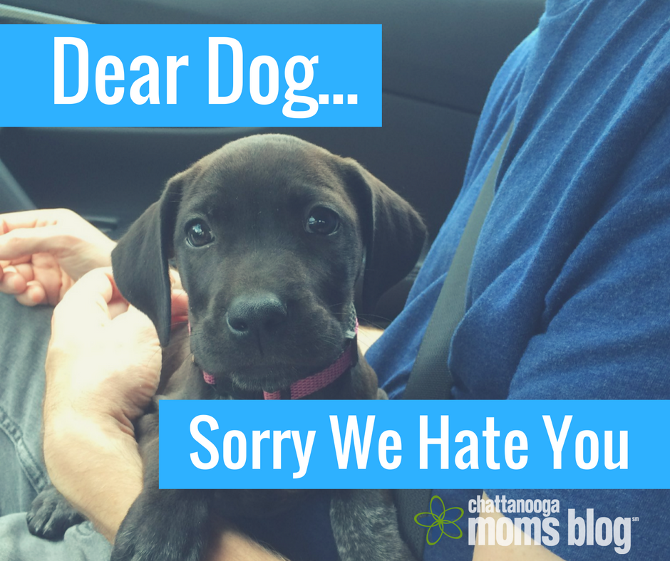 Families with Pets sometimes feel the Guilt | Chattanooga Mom's Blog