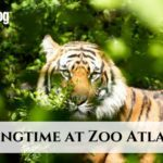 Springtime at Zoo Atlanta