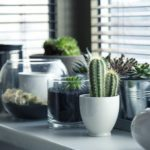 I'm Raising a Cactus: Ways Gardening is Similar to Motherhood