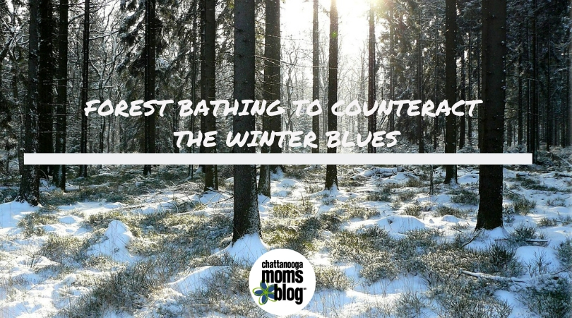 Forest Bathing to Counteract the Winter Blues
