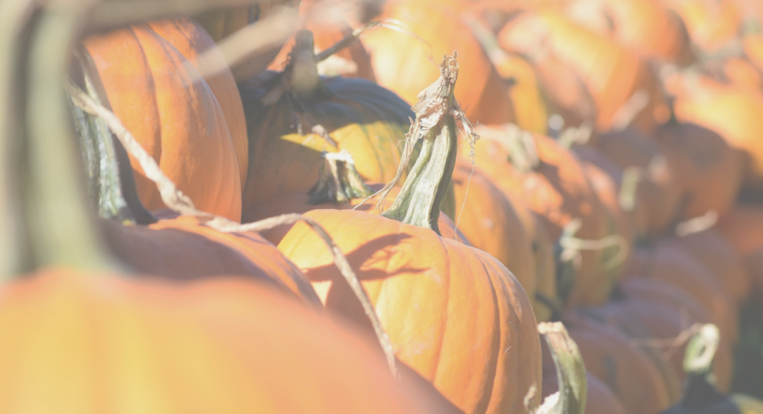 Chattanooga Pumpkin Patches and Corn Mazes