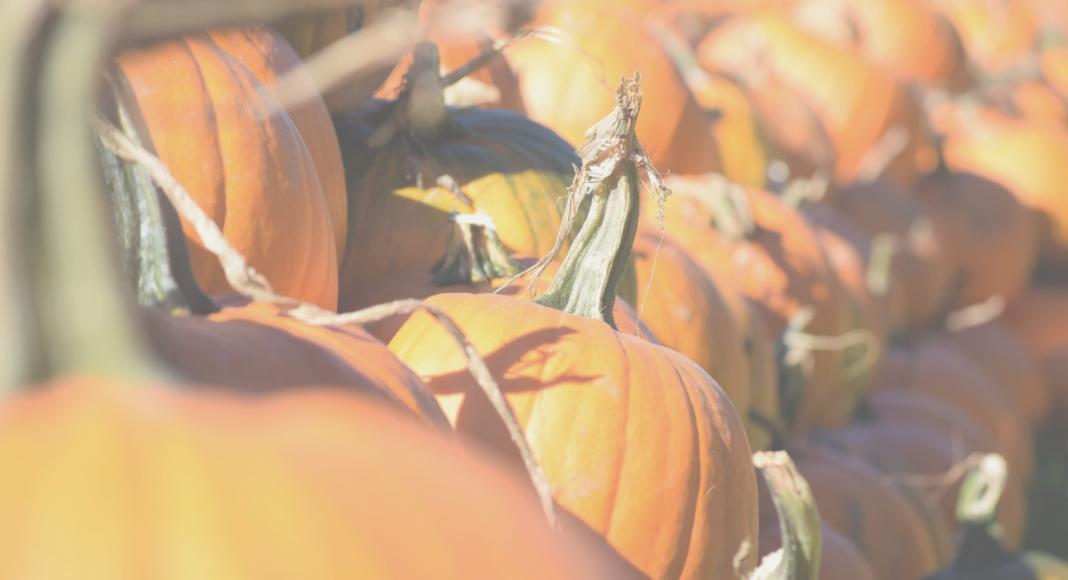 Chattanooga Pumpkin Patch Roundup