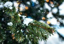 Chattanooga Christmas Tree Farm