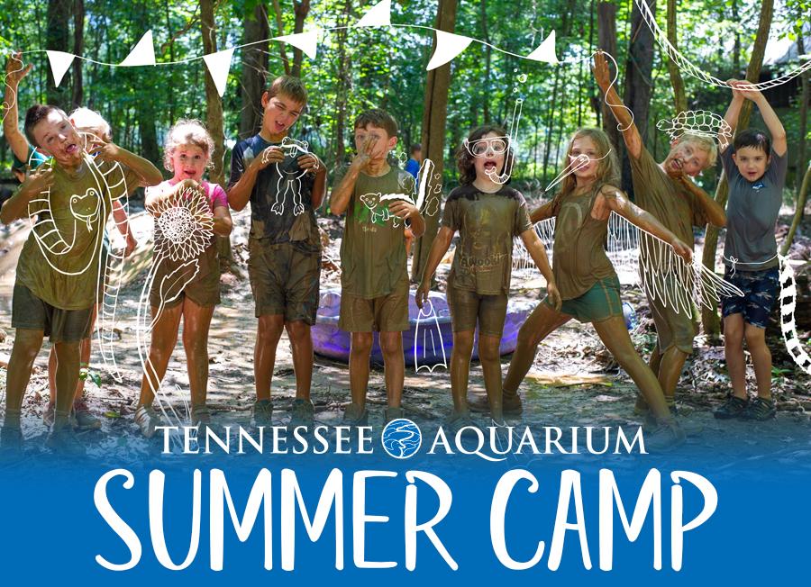 TN Aquarium Summer Camps