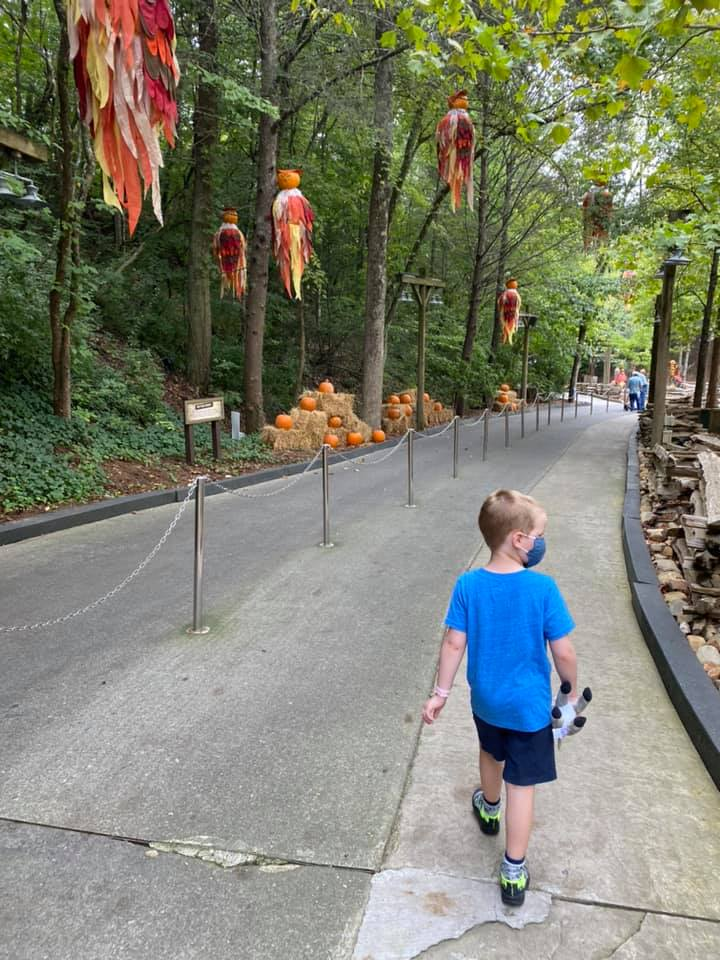 dollywood 15