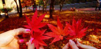 Chattanooga Fall Roundup