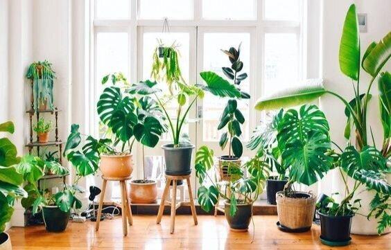 Crazy Plant Mama