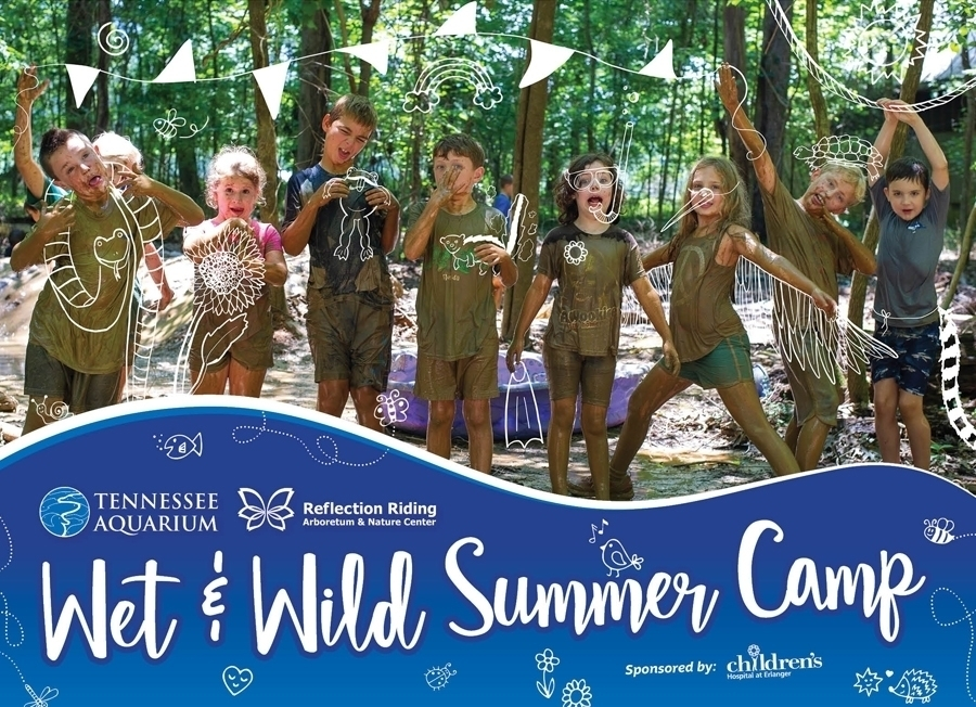 Tennessee Aquarium Summer Camps (2)