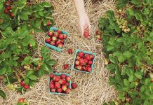 Chattaooga Area Pick-Your-Own-Farms