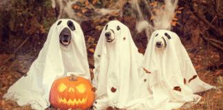 Chattanooga Halloween Events